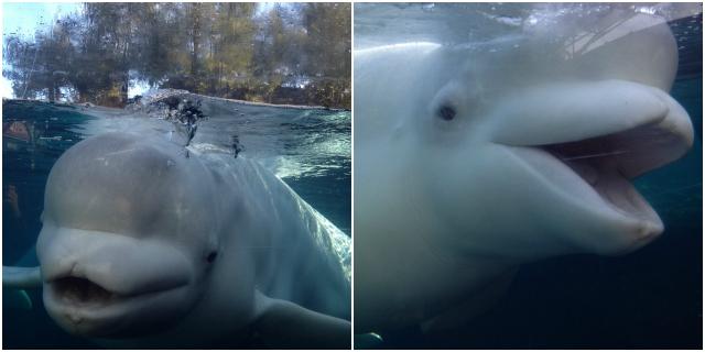 A Trip To Mystic Aquarium 39 S Winter Waterland